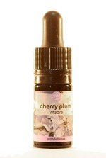 cherry-plum-5-ml_42655