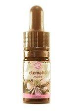 clematis-5-ml_42653