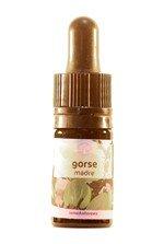 gorse-5-ml_42651