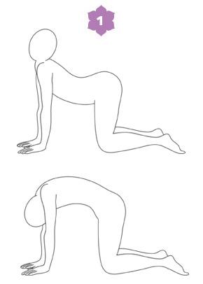 Lezione di Hatha Yoga - Sardula-asana, il gatto