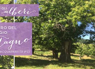 Yoga con gli Alberi: incontro con il castagno